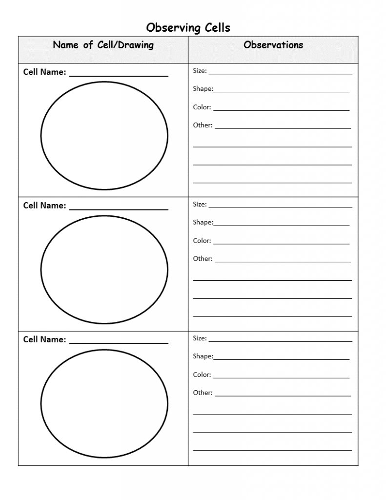 Cell Graphic Organizer