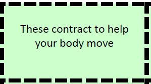 Skeletal Muscle (Function card)