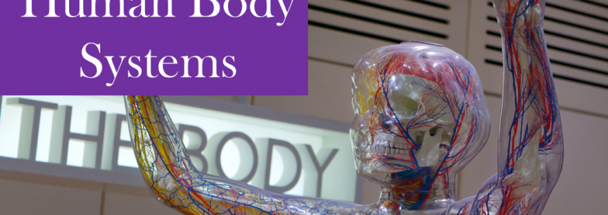 How I Introduce Human Body Systems